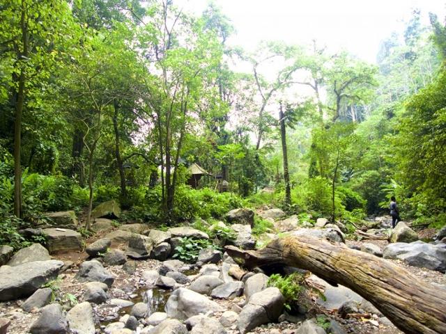Jungle in bali 1024x768 640x480 - Eine Reise mit Freunden