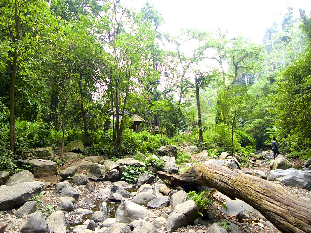 Jungle in bali - Eine Reise mit Freunden
