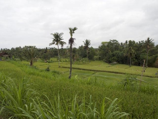another ricefield in bali 1024x768 640x480 - Eine Reise mit Freunden