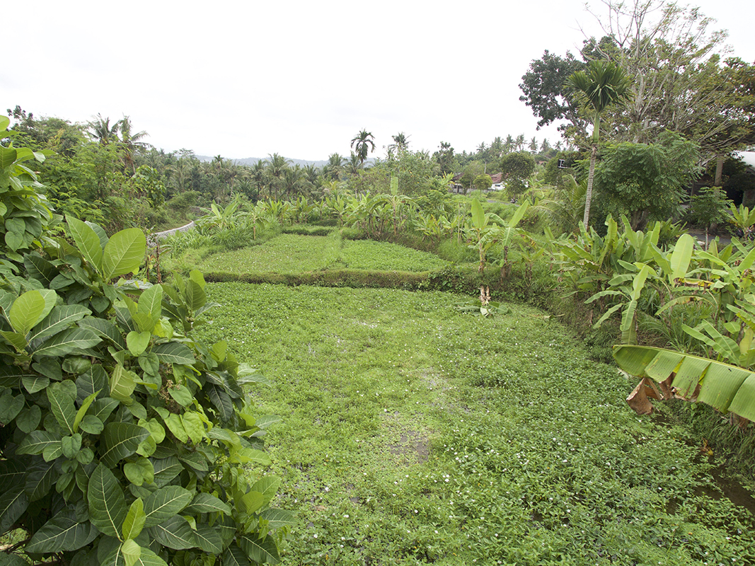 ricefield-and-some-jungle-in-bal