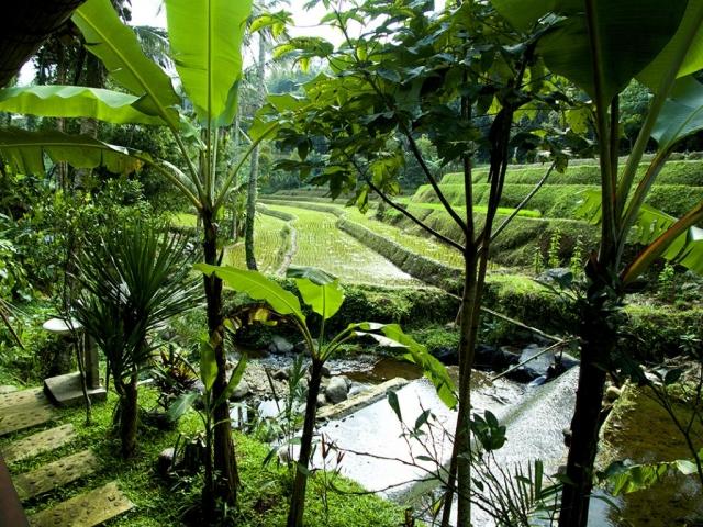 ricefield in bali 1024x768 640x480 - Eine Reise mit Freunden