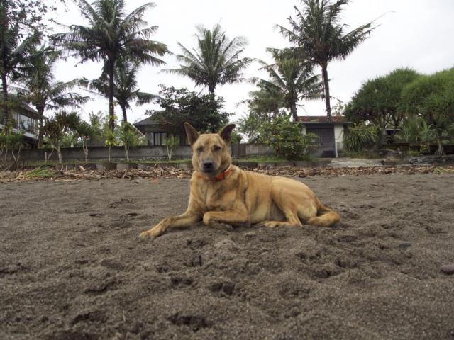 P5240017 1024x768 640x480 - Good bye Bali