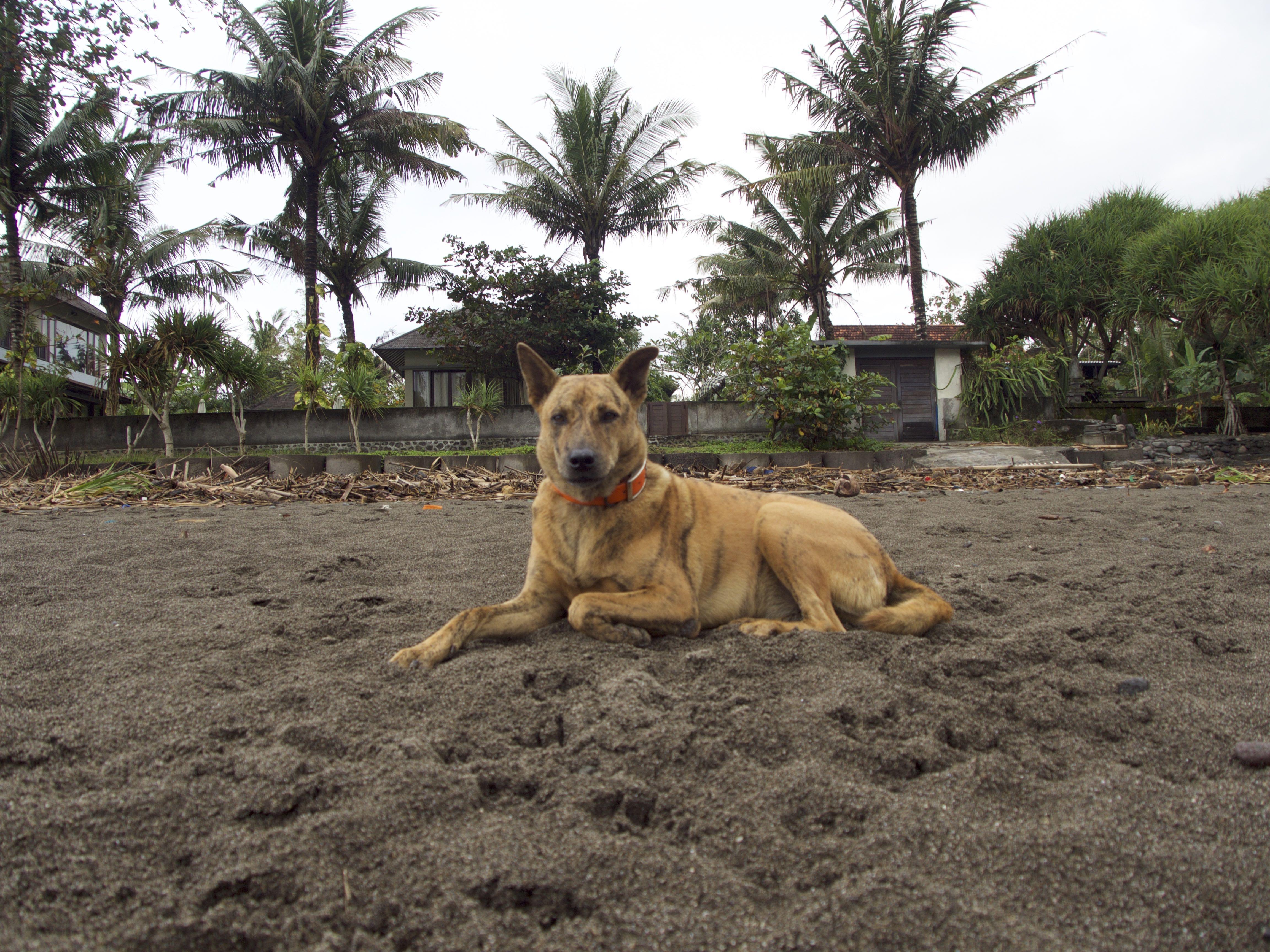 P5240017 - Good bye Bali